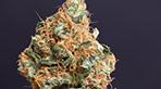 vignette de la galerie photo zoom hd de Flowerbomb Kush by nova store 14