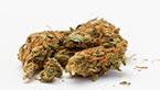 vignette de la galerie photo hd de medical nova seeds sur fond blanc