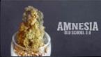 vignette de la vidéo youtube de présentation de Medical nova seeds