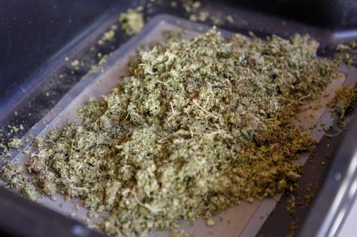 cannasonic - canabis émiettée avant extraction