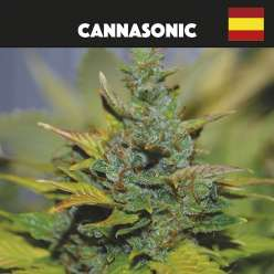 CANNASONIC