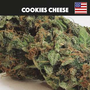 COOKIES CHEESE