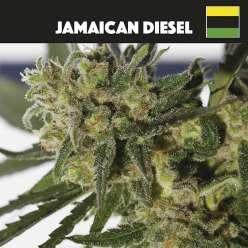 JAMAICAN DIESEL