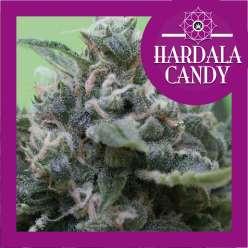 HARDALA CANDY