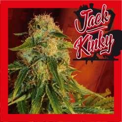 JACK KINKY