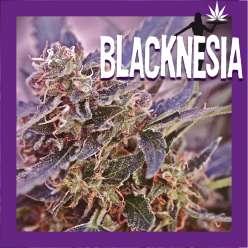 BLACKNESIA