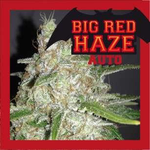 BIG RED HAZE AUTO