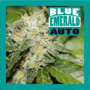 BLUE EMERALD AUTO