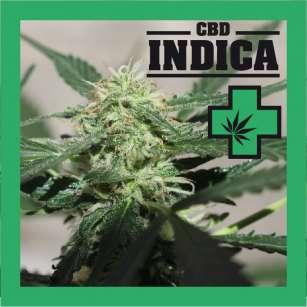 CBD INDICA