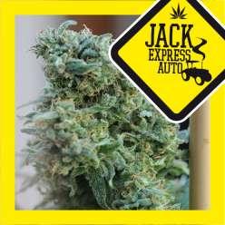 JACK EXPRESS AUTO