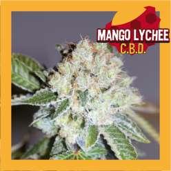 MANGO LYCHEE CBD