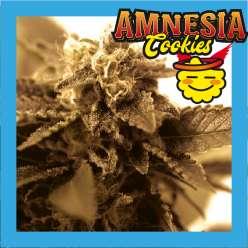 AMNESIA COOKIES