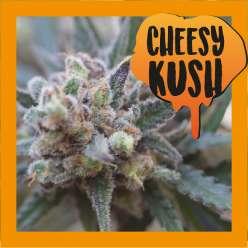 CHEESY KUSH