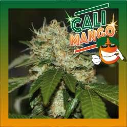 CALI MANGO