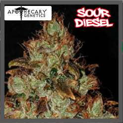 SOUR DIESEL - Regular