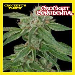 CROCKETT'S CONFIDENTIAL - Regular