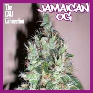 JAMAICAN OG