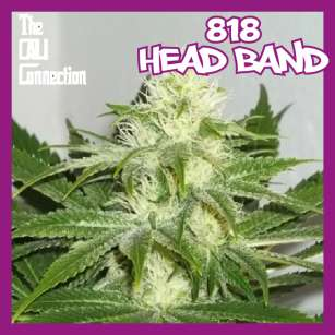 818 HEAD BAND - Regular
