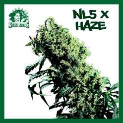 NL5  X HAZE - Regular