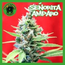 SENORITA AMPARO