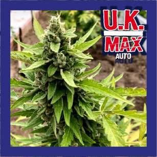 UK MAX AUTO