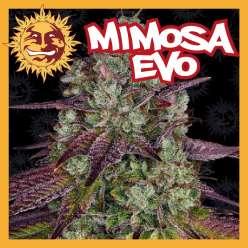 MIMOSA EVO