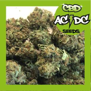 ACDC CBD