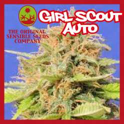 GIRL SCOOT COOKIES AUTO