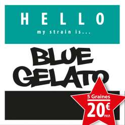 BLUE GELATO PROMO