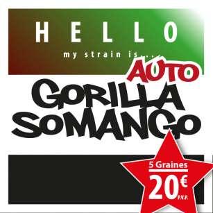 GORILLA SOMANGO AUTO