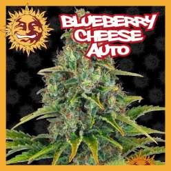 BLUEBERRY CHEESE AUTO
