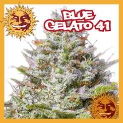 BLUE GELATO 41