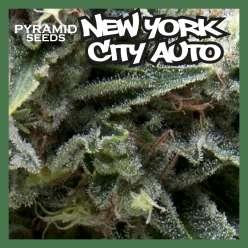 NEW YORK CITY AUTO